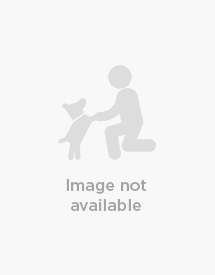 06 Blue Plaid & Navy Gold Paw Series Double Dog Fleece